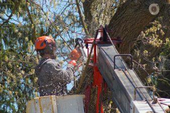 Tree-removal-estimate-cost