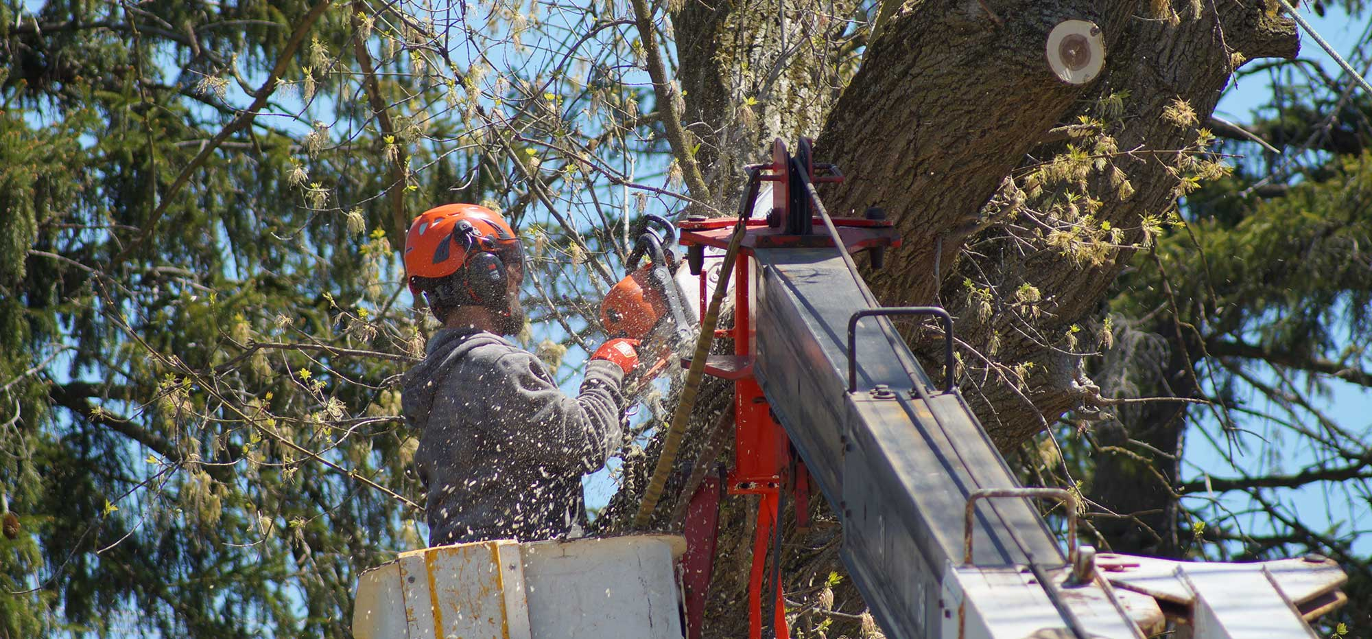 Tree-removal-estimate-cost