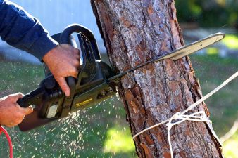 tree trimming services near me