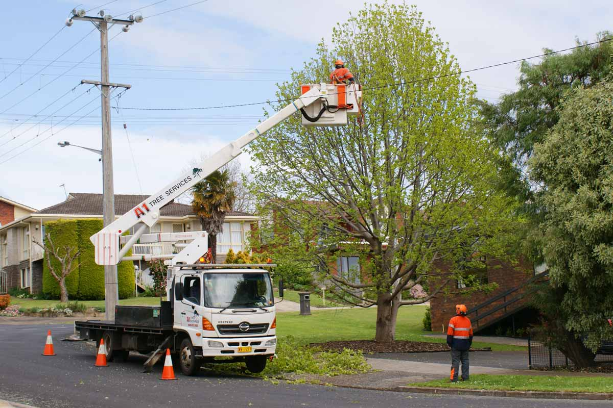 tree trimming cost per hour